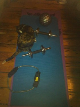 kittyworkout