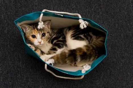 Cat-Bag-5